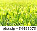 新緑の茶葉-13203 54498075
