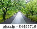 初夏の南禅寺 54499716