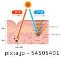 肌図 紫外線ダメージ 54505401