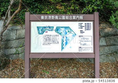 東京都立東京港野鳥公園 54513836