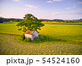 Old barn with damaged, collapsed roof under a large tree in rural landscape 54524160