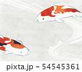 和紙風 錦鯉 テクスチャー 54545361