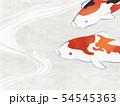 和紙風 錦鯉 テクスチャー 54545363