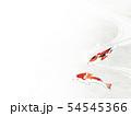 和紙風 錦鯉 テクスチャー 54545366