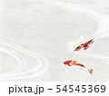 和紙風 錦鯉 テクスチャー 54545369