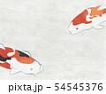 和紙風 錦鯉 テクスチャー 54545376