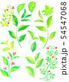新緑の素材 54547068