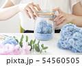 あじさい 紫陽花 ドライフラワー 54560505