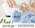 あじさい 紫陽花 ドライフラワー 54560506