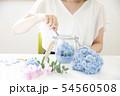 あじさい 紫陽花 ドライフラワー 54560508