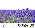 ラベンダー畑 背景キリヌキ 54569182