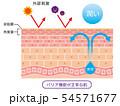 肌のバリア機能 皮膚構造 54571677