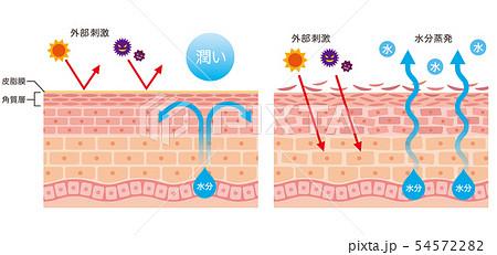 肌のバリア機能 皮膚構造 54572282