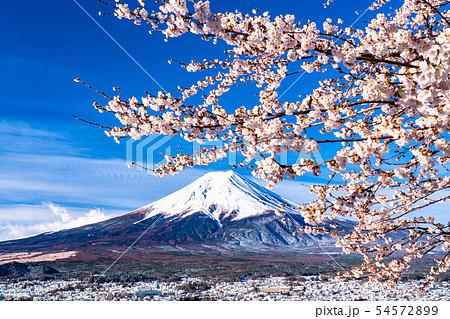 《山梨県》富士山を望む・桜と雪の新倉山浅間公園 54572899