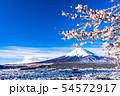 《山梨県》富士山を望む・桜と雪の新倉山浅間公園 54572917
