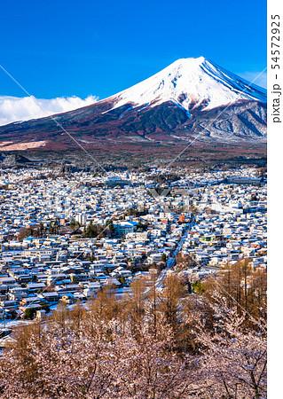 《山梨県》富士山を望む・桜と雪の新倉山浅間公園 54572925