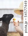 綿羊農家 54577449