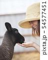 綿羊農家 54577451
