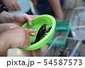 ザリガニ釣りをする子ども 54587573