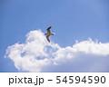 【青空 ユリカモメ】 54594590