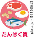 五大栄養素 たんぱく質 54596013