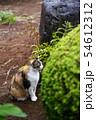 外猫 54612312