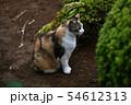 外猫 54612313