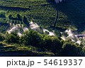 Sprinkler irrigation in orchard - Trentino Italy  54619337