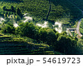 Sprinkler irrigation in orchard - Trentino Italy  54619723