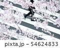 【桜・横断歩道】・歩く人 54624833
