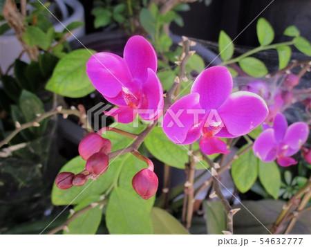 花 野花 花びら 54632777