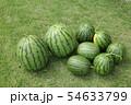 スイカの収穫 54633799