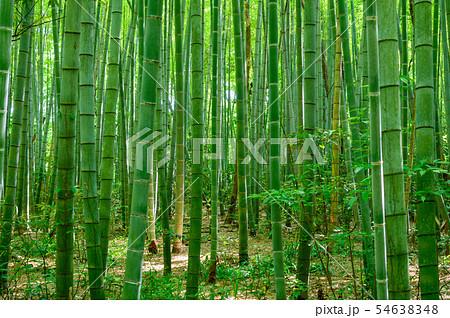 竹林 橋立自然公園(石川県加賀市)7月撮影 54638348