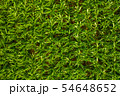 Green plants, green background, natural texture, aerial top down view of a green corn field 54648652