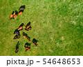Birds eye view of horses grazing on pasture 54648653