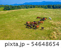 Horses grazing on pasture, aerial view of green landscape with a herd of brown horses and a single 54648654