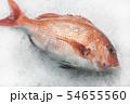 明石の鯛 タイの姿 54655560