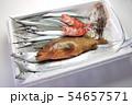 瀬戸内海の鮮魚(タチウオ、アコウ、サヨリ、メバル、コウイカ) 54657571