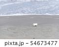 プラスチックごみ 海洋汚染 環境問題 海 砂浜 海岸 54673477