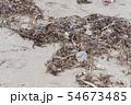 プラスチックごみ 海洋汚染 環境問題 海 砂浜 海岸 54673485