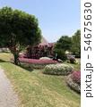 公園の花 54675630