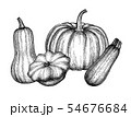 Ink sketch of squashes. 54676684
