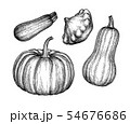 Ink sketch of squashes. 54676686