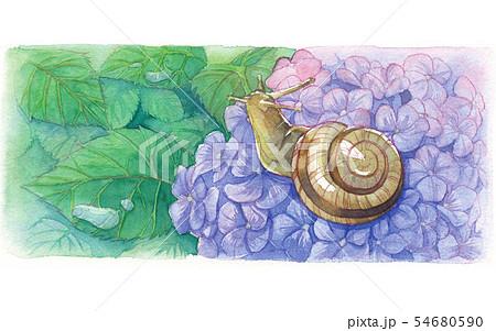 日本の年中行事イラスト:6月/かたつむりと紫陽花 54680590