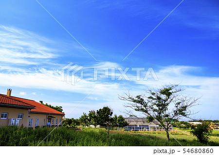 ソレイユの丘(夏) 54680860