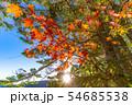 秋の白駒の池 朝焼け 【長野県】 54685538