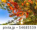 秋の白駒の池 朝焼け 【長野県】 54685539