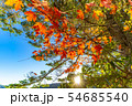 秋の白駒の池 朝焼け 【長野県】 54685540