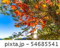 秋の白駒の池 朝焼け 【長野県】 54685541