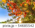 秋の白駒の池 朝焼け 【長野県】 54685542